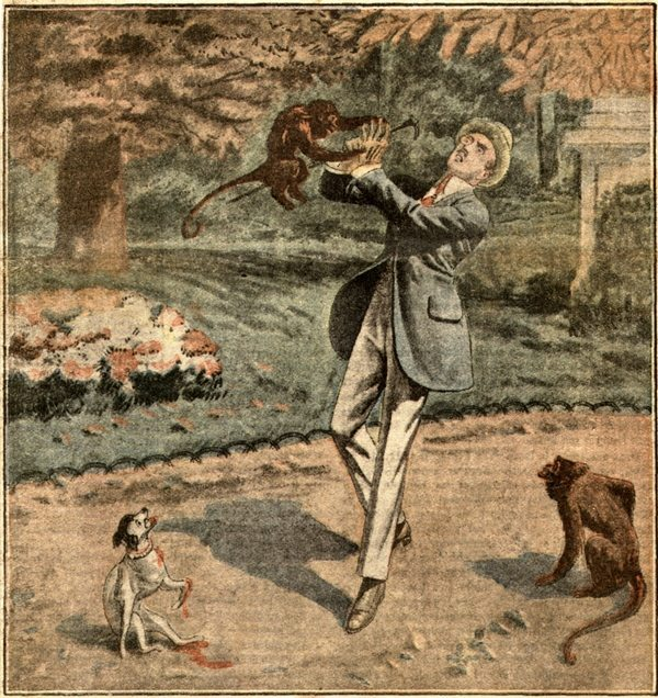 bite from monkey